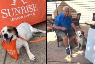 After Spending Life in Cage, Rescue Dog is Adopted By Senior Care Home the Day Before She Was to Be Euthanized