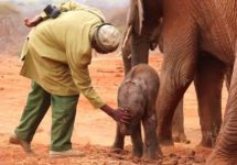 Orphaned Elephant Returns to Human Rescuers So She Can Introduce Them to Her Newborn Calf