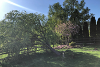 A Massive Willow Tree Fell in Richboro and Giroud and Lawn Saves It by…