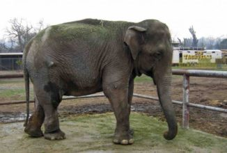 Last Performing Circus Elephant of Chile is Rescued and Moved to New Sanctuary to Live Out Her Golden Years