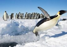 Satellites Reveal There Are 20% More Emperor Penguin Colonies in Antarctica Than Previously Thought