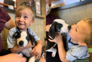 Adorable Boy With a Cleft Lip Finds His Perfect Match–A Puppy With The Same Condition